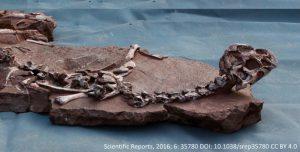 Mud Dragon Fossil