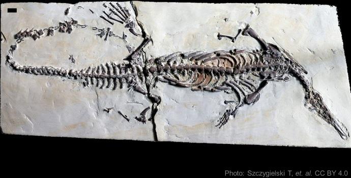 Mesosaur Scoliosis