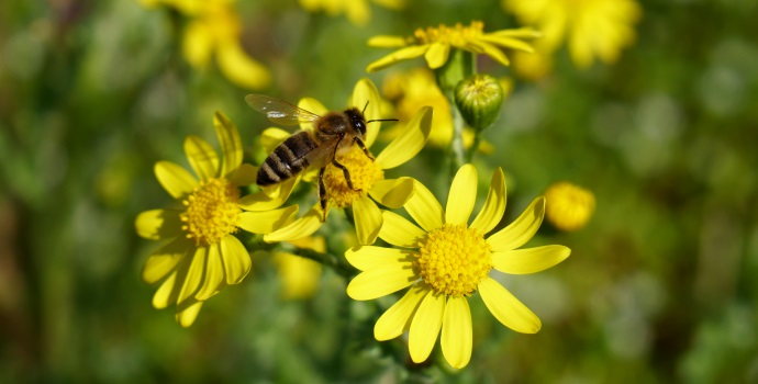 Bee Yellow Flowers