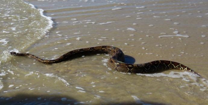 Snake Sea