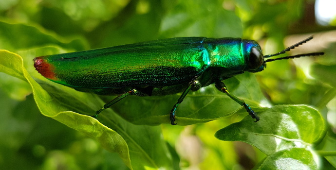 Iridescent Insect