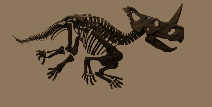 Centrosaurus