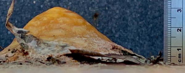 Stalagmite at Jurassic Ark