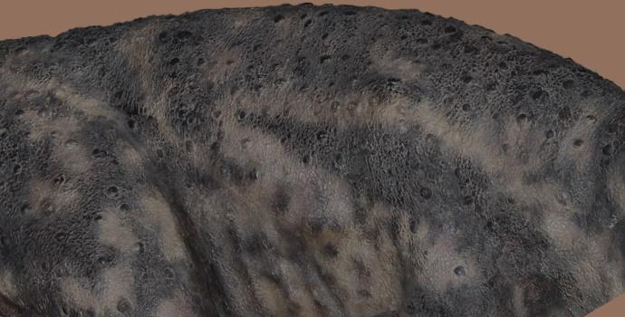Dinosaur Skin