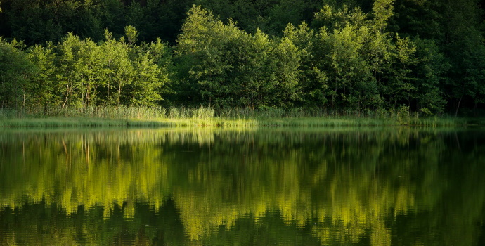 Lakeside Vegetation